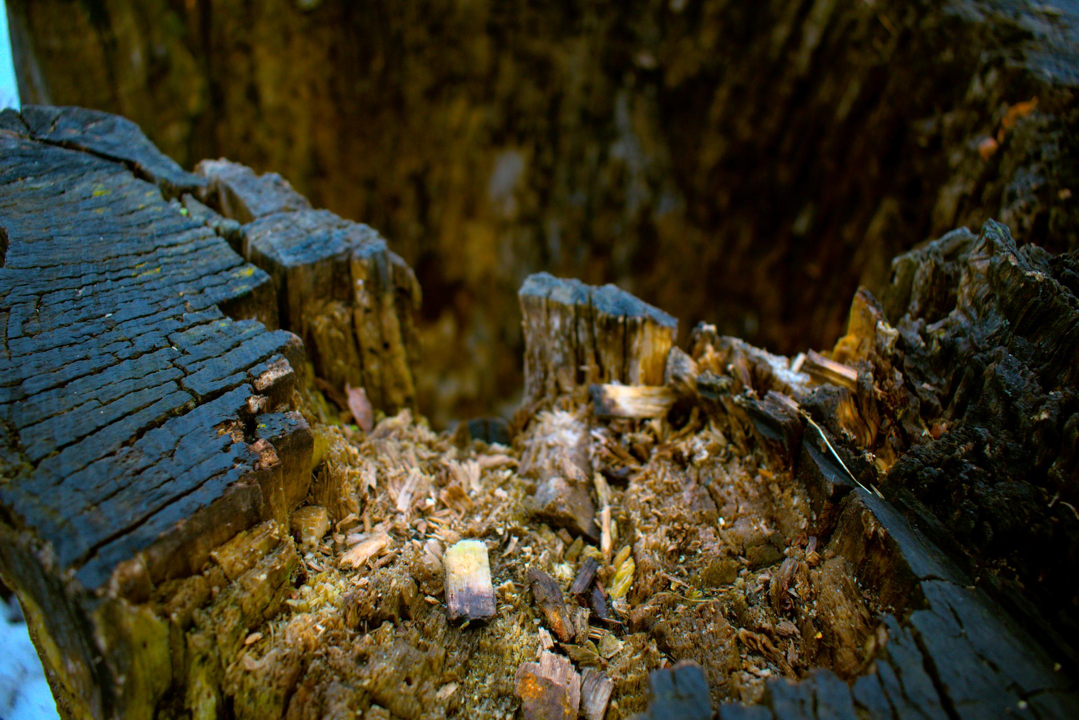 Cold-Tinted Log
